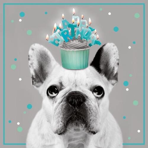 Biglietto Compleanno 3d A Splash Of Colour Azzurro Cane Libraccio It